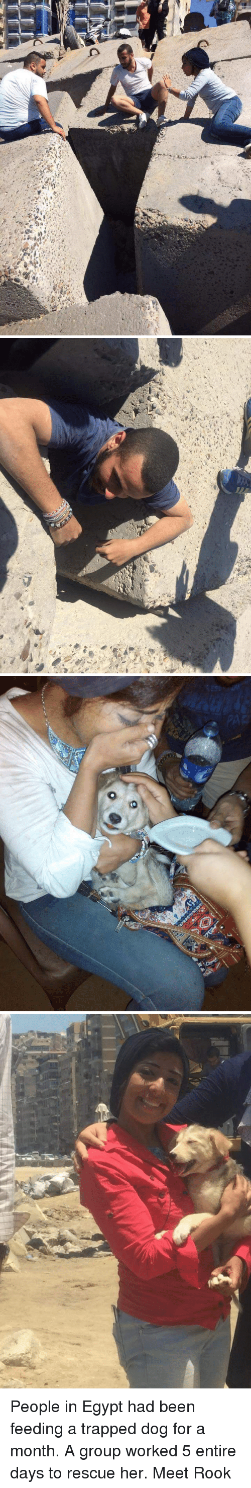 """Funny: """"fan i :与,""""r""""me',  ら1   o People in Egypt had been feeding a trapped dog for a month. A group worked 5 entire days to rescue her. Meet Rook"""