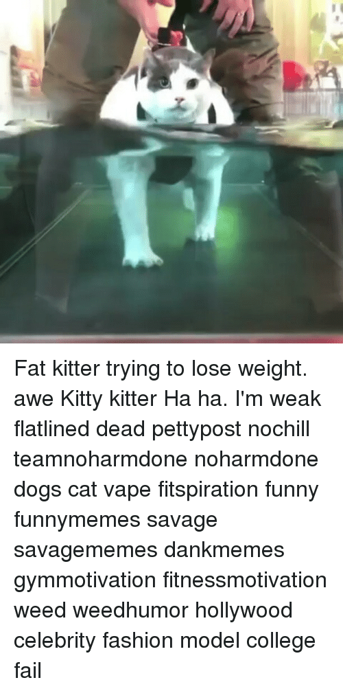 awe: Fat kitter trying to lose weight. awe Kitty kitter Ha ha. I'm weak flatlined dead pettypost nochill teamnoharmdone noharmdone dogs cat vape fitspiration funny funnymemes savage savagememes dankmemes gymmotivation fitnessmotivation weed weedhumor hollywood celebrity fashion model college fail