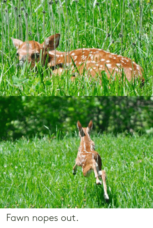 Nopes: Fawn nopes out.