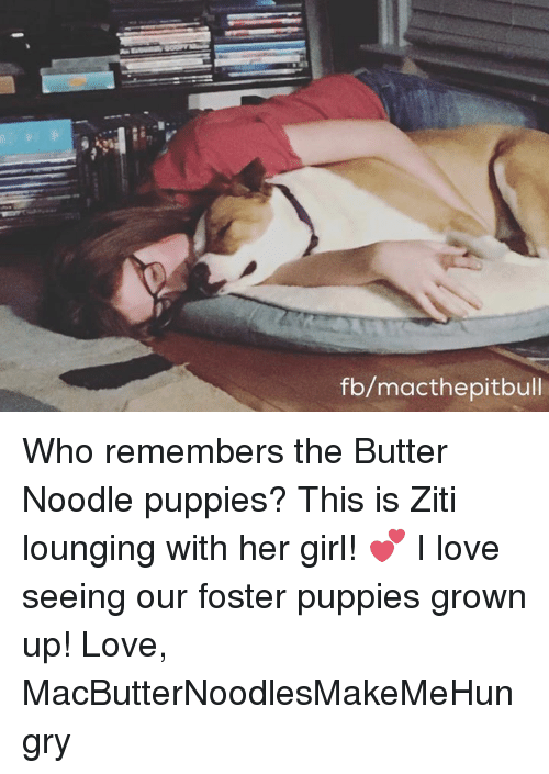 noodling: fb/macthe pitbull Who remembers the Butter Noodle puppies? This is Ziti lounging with her girl! 💕 I love seeing our foster puppies grown up!  Love, MacButterNoodlesMakeMeHungry