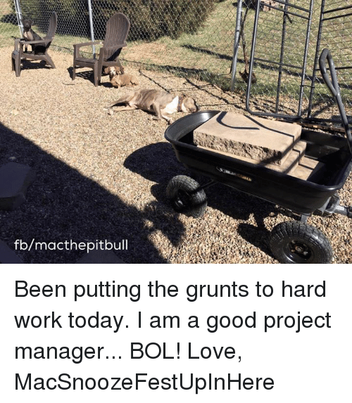 Love, Memes, and Work: fb/macthepitbull Been putting the grunts to hard work today. I am a good project manager... BOL!   Love,  MacSnoozeFestUpInHere