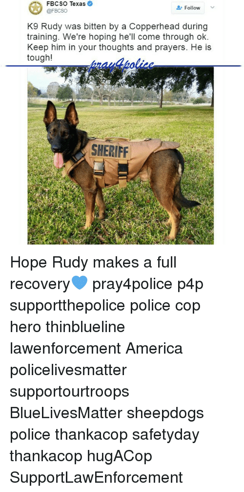 America, Memes, and Police: FBCSO Texas  Follow  @FBCSO  K9 Rudy was bitten by a Copperhead during  training. We're hoping he'll come through ok.  Keep him in your thoughts and prayers. He is  tough!  SHERIFF Hope Rudy makes a full recovery💙 pray4police p4p supportthepolice police cop hero thinblueline lawenforcement America policelivesmatter supportourtroops BlueLivesMatter sheepdogs police thankacop safetyday thankacop hugACop SupportLawEnforcement