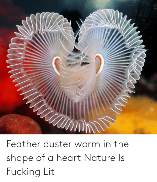 worm: Feather duster worm in the shape of a heart Nature Is Fucking Lit