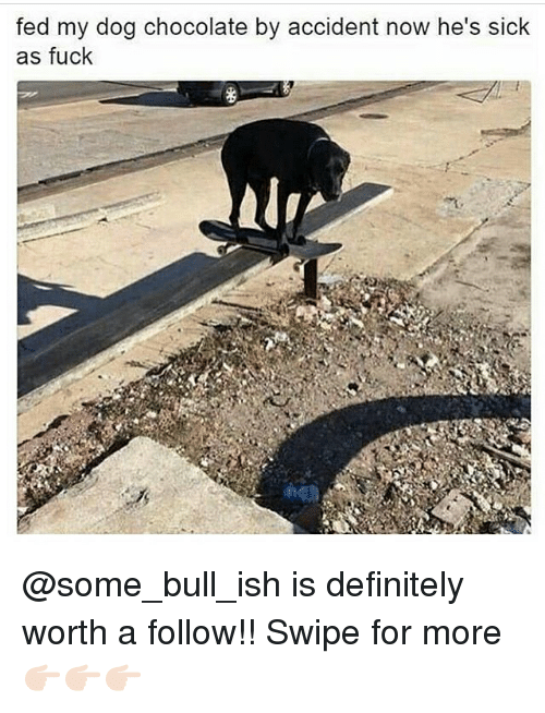 Memes, 🤖, and Bull: fed my dog chocolate by accident now he's sick  as fuck @some_bull_ish is definitely worth a follow!! Swipe for more 👉🏻👉🏻👉🏻