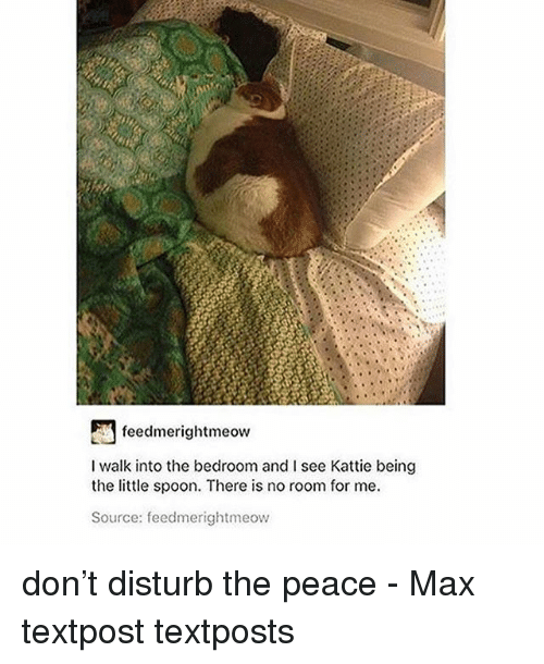 Memes, Peace, and 🤖: feedmerightmeow  I walk into the bedroom and I see Kattie being  the little spoon. There is no room for me.  Source: feedmerightmeow don't disturb the peace - Max textpost textposts