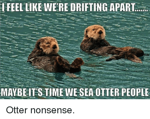 Memes, Time, and Nonsense: FEEL LIKE WERE DRIFTING APART  MAYBEIT'S TIME WE SEA OTTER PEOPLE Otter nonsense.