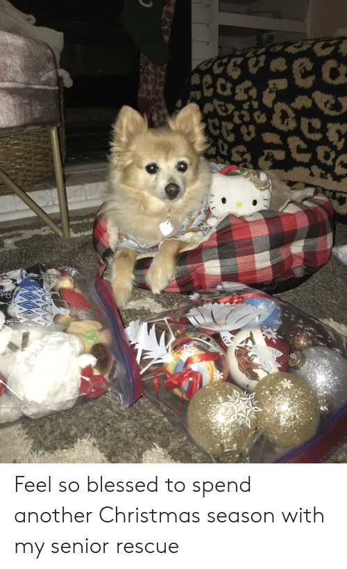 So Blessed: Feel so blessed to spend another Christmas season with my senior rescue