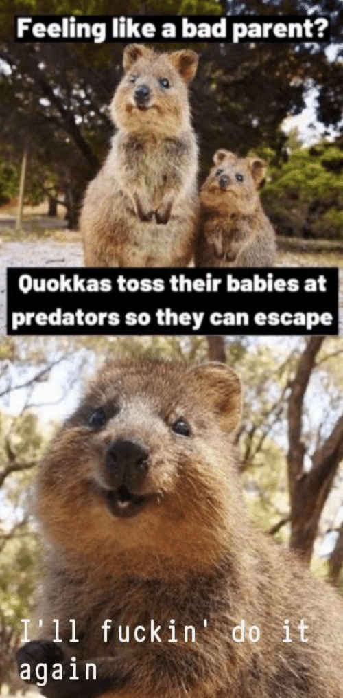 predators: Feeling like a bad parent?  Ouokkas toss their babies at  predators so they can escape  P11 fuckin'do it  again