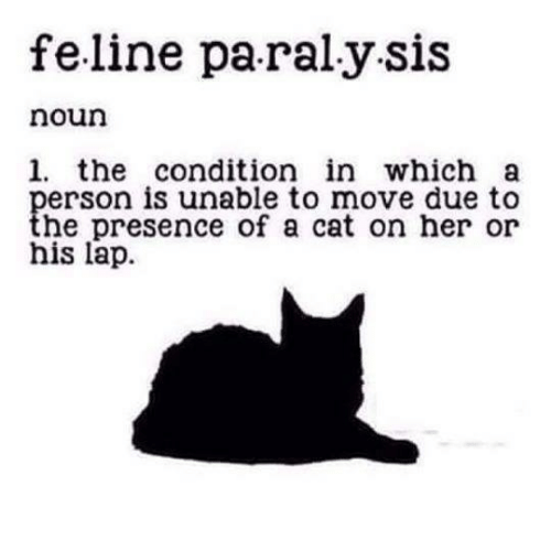feline: feline pa ralysis  noun  1. the condition in which a  person is unable to move due to  the presence of a cat on her or  his lap.