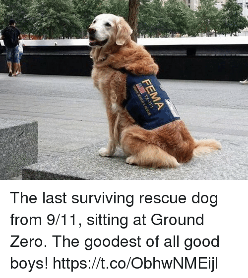 rescue dog: FEMA The last surviving rescue dog from 9/11, sitting at Ground Zero. The goodest of all good boys! https://t.co/ObhwNMEijl