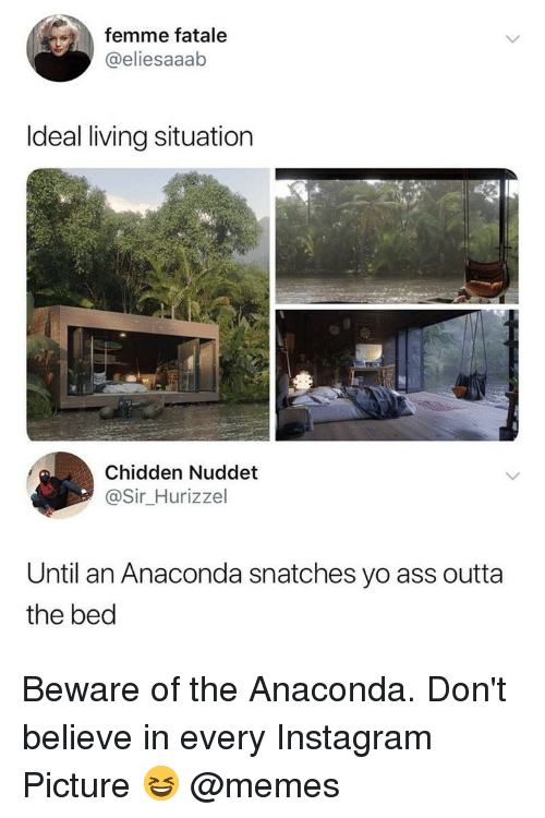 Anaconda, Ass, and Instagram: femme fatale  @eliesaaab  Ideal living situation  Chidden Nuddet  @Sir_Hurizzel  Until an Anaconda snatches yo ass outta  the bed Beware of the Anaconda. Don't believe in every Instagram Picture 😆 @memes