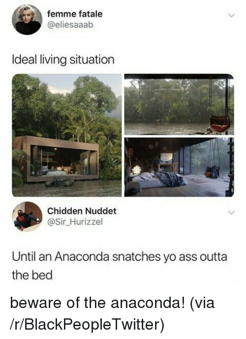 Anaconda, Ass, and Blackpeopletwitter: femme fatale  @eliesaaab  Ideal living situation  Chidden Nuddet  @Sir_Hurizzel  Until an Anaconda snatches yo ass outta  the bed beware of the anaconda! (via /r/BlackPeopleTwitter)