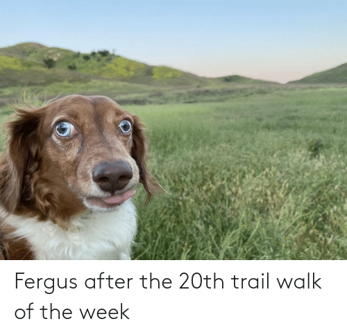 walk: Fergus after the 20th trail walk of the week