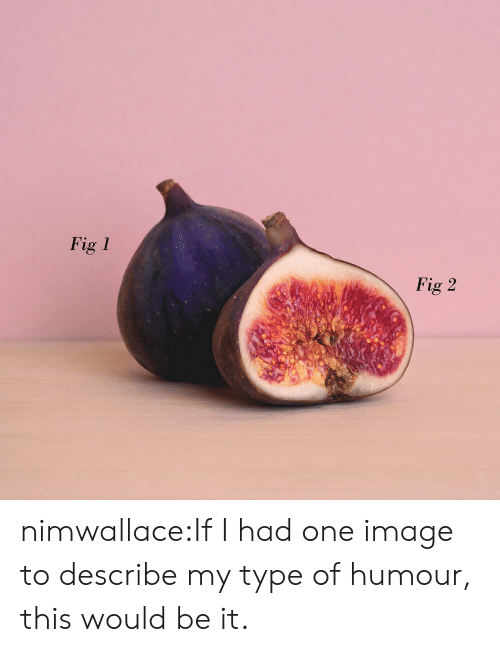 humour: Fig 1  Fig 2 nimwallace:If I had one image to describe my type of humour, this would be it.