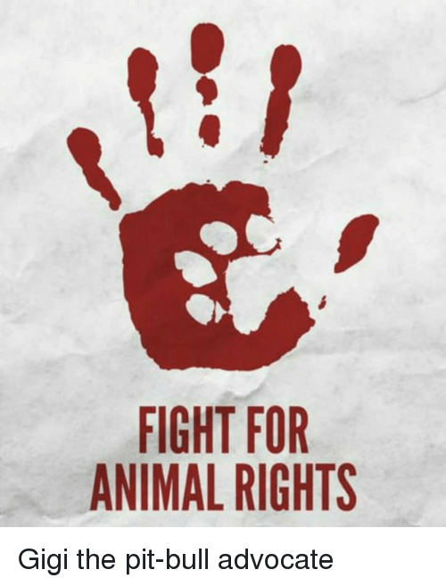 animal rights For more than three decades, the animal legal defense fund has been fighting to protect the lives and advance the interests of animals through the legal system.