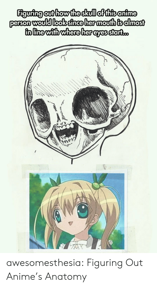 anatomy: Figuring out how the skull of this anime  person would look since her moufth is almost  in line with where her eyes start.c. awesomesthesia:  Figuring Out Anime's Anatomy