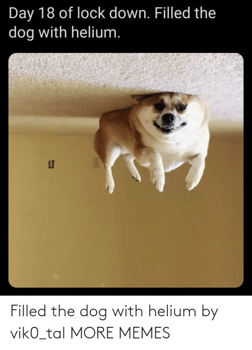 the dog: Filled the dog with helium by vik0_tal MORE MEMES
