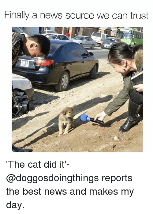 Cats, Memes, and News: Finally a news source we can rust 'The cat did it'-@doggosdoingthings reports the best news and makes my day.