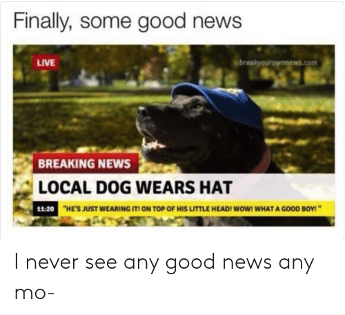 Breakyourownnews Com: Finally, some good news  LIVE  breakyourownnews.com  BREAKING NEWS  LOCAL DOG WEARS HAT  11:20  HE'S JUST WEARING IT ON TOP OF HIS LITTLE HEADI WOW! WHAT A GOOD BOY! I never see any good news any mo-
