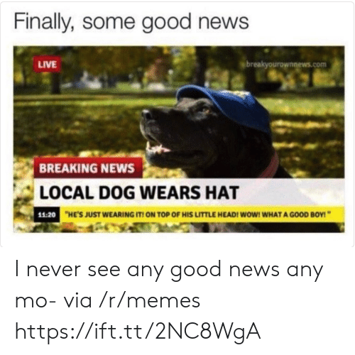 Breakyourownnews Com: Finally, some good news  LIVE  breakyourownnews.com  BREAKING NEWS  LOCAL DOG WEARS HAT  11:20  HE'S JUST WEARING IT ON TOP OF HIS LITTLE HEADI WOW! WHAT A GOOD BOY! I never see any good news any mo- via /r/memes https://ift.tt/2NC8WgA
