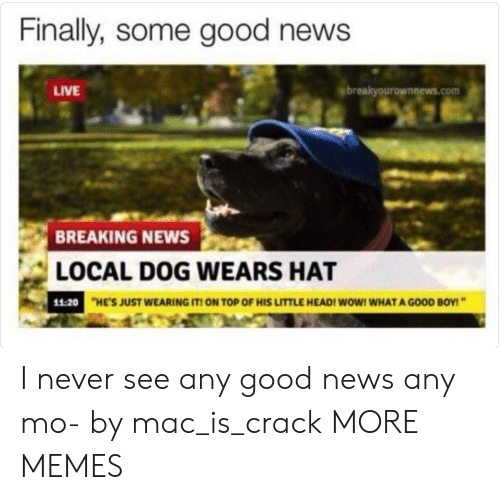 Breakyourownnews Com: Finally, some good news  LIVE  breakyourownnews.com  BREAKING NEWS  LOCAL DOG WEARS HAT  11:20  HE'S JUST WEARING IT ON TOP OF HIS LITTLE HEADI WOW! WHAT A GOOD BOY! I never see any good news any mo- by mac_is_crack MORE MEMES
