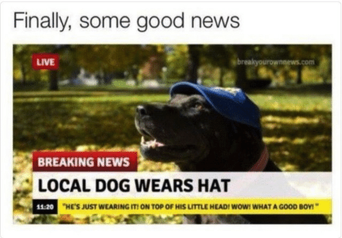 """News Live: Finally, some good news  LIVE  breakyourownnews.com  BREAKING NEWS  LOCAL DOG WEARS HAT  11:20  HE'S JUST WEARING IT! ON TOP OF HIS LITTLE HEAD! WoW! WHAT A GOOD BOY!"""""""