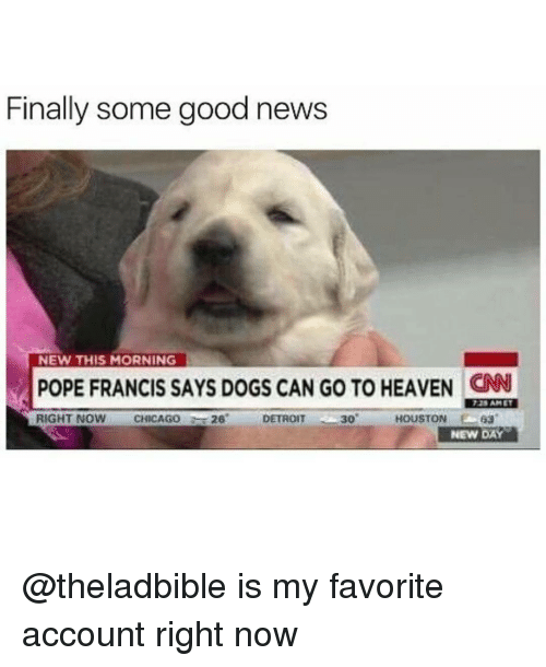 Chicago, Detroit, and Dogs: Finally some good news  NEW THIS MORNING  POPE FRANCIS SAYS DOGs CAN Go TO HEAVEN AM ET  RIGHT NOW  CHICAGO  26  DETROIT  30  HOUSTON  63  NEW DAY @theladbible is my favorite account right now