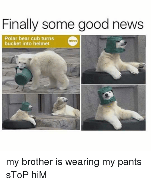 My Pant: Finally some good news  Polar bear cub turns  bucket into helmet my brother is wearing my pants sToP hiM