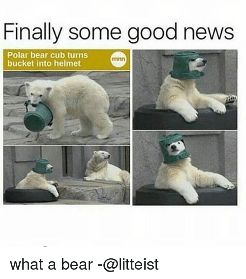 Memes, News, and Bear: Finally some good news  Polar bear cub turns  bucket into helmet  mnn what a bear -@litteist