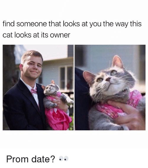 dating someone with cats