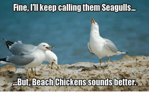 Image result for funny seagull memes
