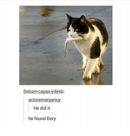 Infiniti: finitum-capax-infiniti:  actoremergency:  He did it  he found Dory