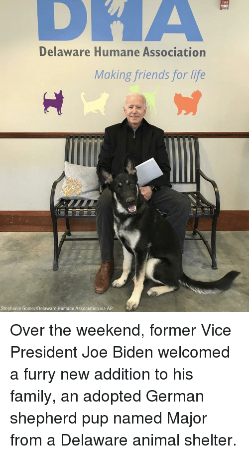 biden: FIRE  Delaware Humane Association  Making friends for life  Stephanie Gomez/Delaware Humane Association via AP Over the weekend, former Vice President Joe Biden welcomed a furry new addition to his family, an adopted German shepherd pup named Major from a Delaware animal shelter.