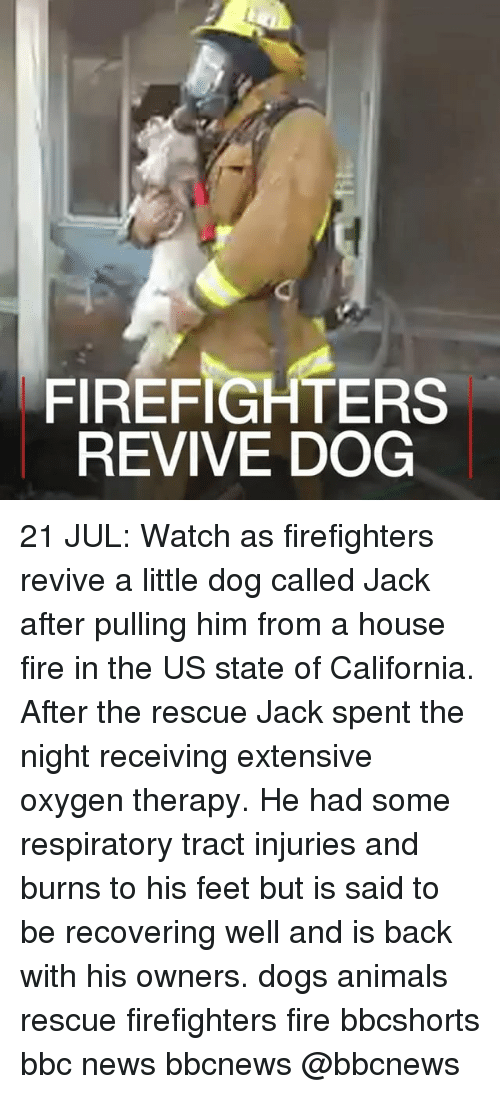 Animals, Dogs, and Fire: FIREFIGHTERS  REVIVE DOG 21 JUL: Watch as firefighters revive a little dog called Jack after pulling him from a house fire in the US state of California. After the rescue Jack spent the night receiving extensive oxygen therapy. He had some respiratory tract injuries and burns to his feet but is said to be recovering well and is back with his owners. dogs animals rescue firefighters fire bbcshorts bbc news bbcnews @bbcnews