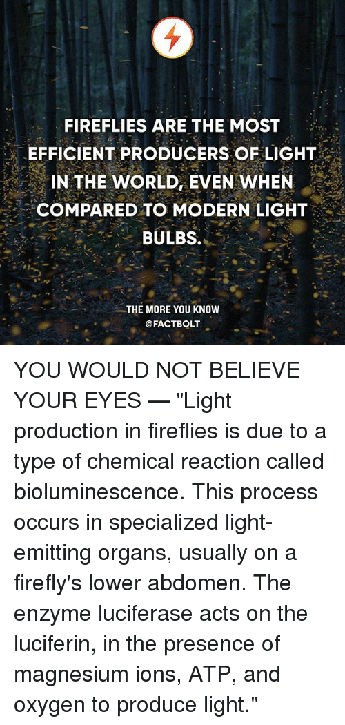 "magnesium: FIREFLIES ARE THE MOST  EFFICIENT PRODUCERS OF LIGHT  IN THE WORLD, EVEN WHEN  COMPARED TO MODERN LIGHT  BULBS.  .  THE MORE YOU KNOW  @FACTBOLT YOU WOULD NOT BELIEVE YOUR EYES — ""Light production in fireflies is due to a type of chemical reaction called bioluminescence. This process occurs in specialized light-emitting organs, usually on a firefly's lower abdomen. The enzyme luciferase acts on the luciferin, in the presence of magnesium ions, ATP, and oxygen to produce light."""