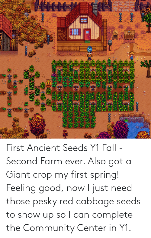 feeling good: First Ancient Seeds Y1 Fall - Second Farm ever. Also got a Giant crop my first spring! Feeling good, now I just need those pesky red cabbage seeds to show up so I can complete the Community Center in Y1.