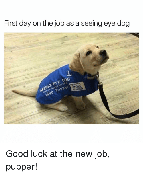 Good Luck New Job Meme Funny : First day on the job as a seeing eye dog good luck at