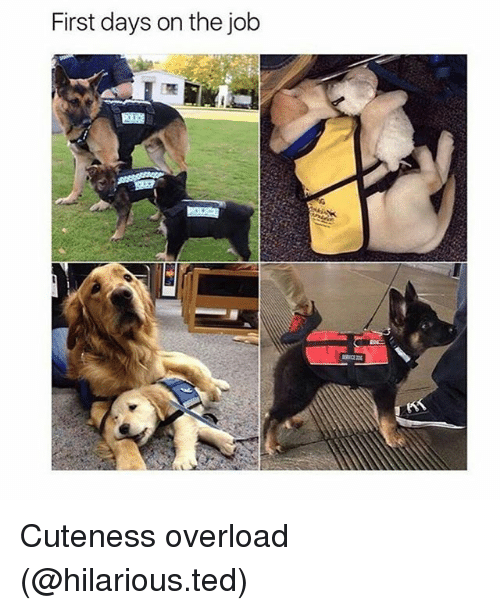 Funny, Ted, and Hilarious: First days on the job Cuteness overload (@hilarious.ted)