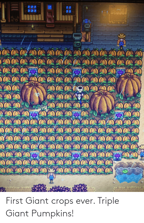 triple: First Giant crops ever. Triple Giant Pumpkins!