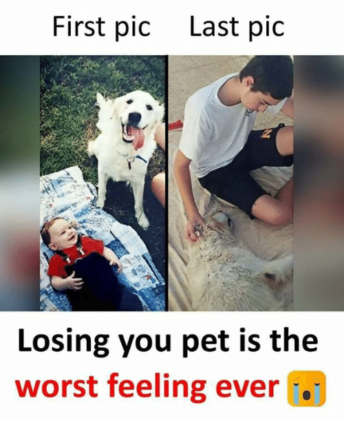 Memes, The Worst, and 🤖: First pic  Last pic  Losing you pet is the  worst feeling ever