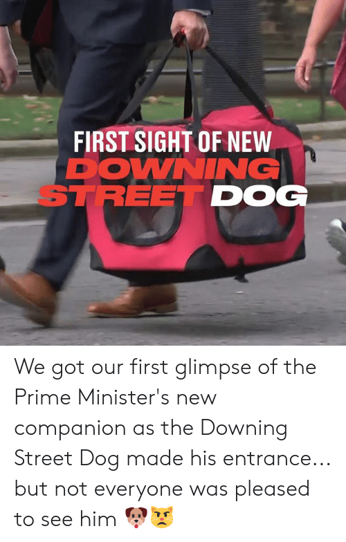 pleased: FIRST SIGHT OF NEW  DOWNING  STREET DOG We got our first glimpse of the Prime Minister's new companion as the Downing Street Dog made his entrance... but not everyone was pleased to see him 🐶😾