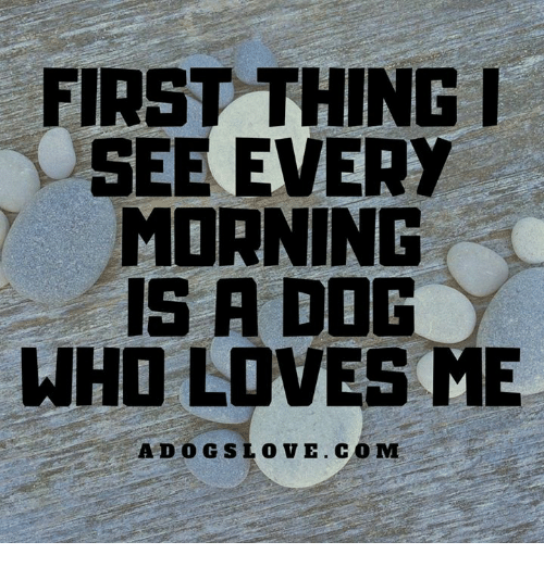 Memes, 🤖, and Dog: FIRST THING  SEE EVERY  MORNING  1S A DOG  WHO LOVES ME  ADOGSLOVE. COM