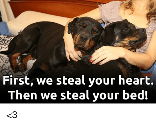 Memes, Heart, and 🤖: First, we steal your heart.  Then we steal your bed! <3