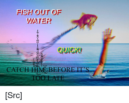 Reddit, Fish, and Com: FISH OUTOF  2  i a  CATCH HHM BEFORE ITS  TOO LATE [Src]