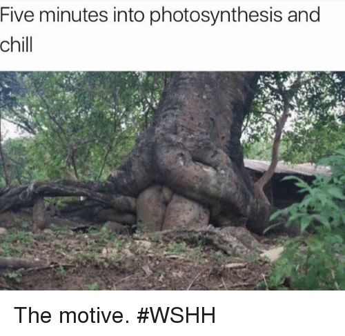 Chill, Wshh, and Photosynthesis: Five minutes into photosynthesis and  chill The motive. #WSHH