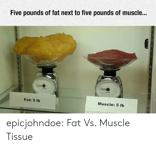tissue: Five pounds of fat next to five pounds of muscle...  Fat: 5 lb  Muscle: 5 lb epicjohndoe:  Fat Vs. Muscle Tissue
