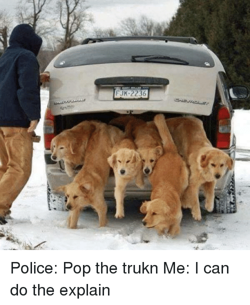Dogs: FJK 2236 Police: Pop the trukn Me: I can do the explain