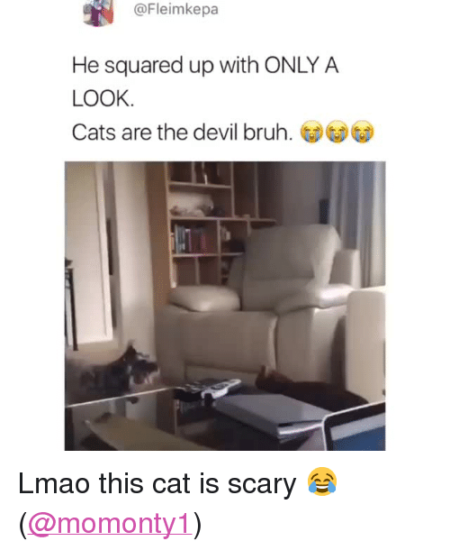 """squared: @Fleimkepa  He squared up with ONLY A  LOOK  Cats are the devil bruh. <p>Lmao this cat is scary 😂</p><p>(<a href=""""https://www.instagram.com/momonty1/"""" target=""""_blank"""">@momonty1</a>)<br/></p>"""