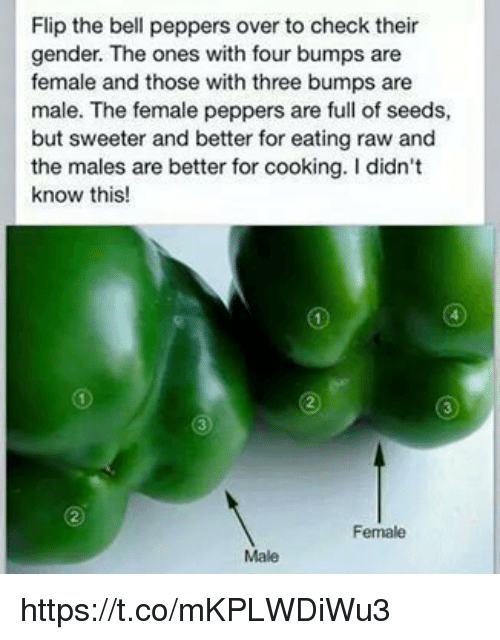 belle pepper: Flip the bell peppers over to check their  gender. The ones with four bumps are  female and those with three bumps are  male. The female peppers are full of seeds,  but sweeter and better for eating raw and  the males are better for cooking. Ididn't  know this!  Female  Male https://t.co/mKPLWDiWu3