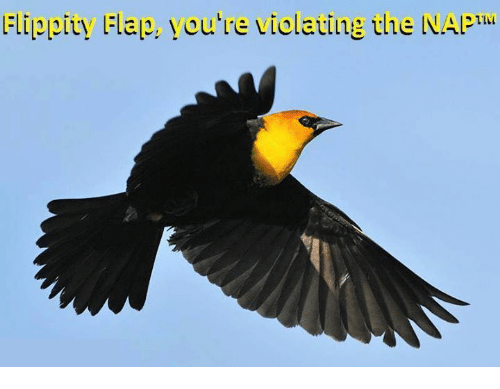 flapping: Flipplty Flap, you're violating the NAPILL